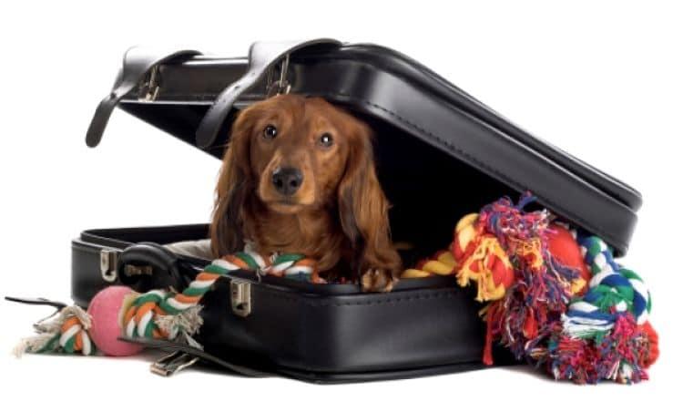 Es mejor que tu mascota tenga una maleta solo para sus cosas
