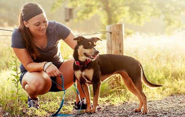 tratamiento de la diabetes en perros
