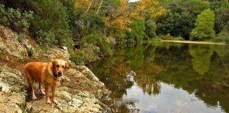 Casas-rurales-en-Asturias-que-admiten-perros2