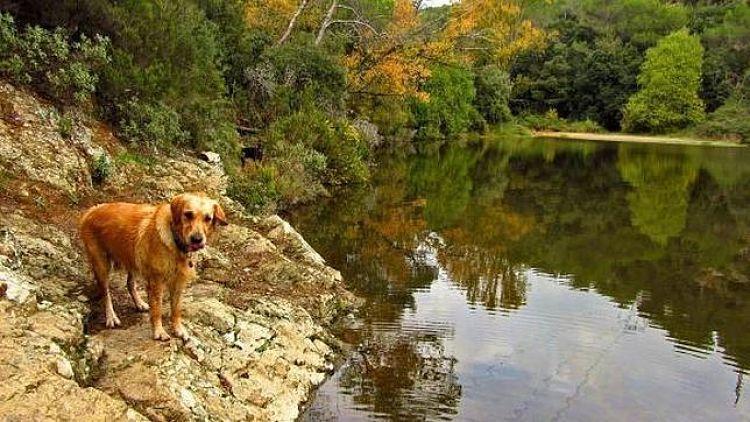 8 casas rurales en asturias que admiten perros mascotafiel - Casa rural asturias mascotas ...
