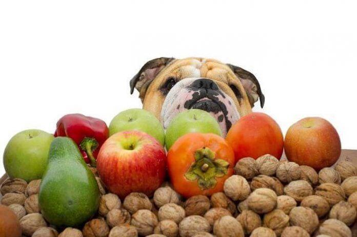 Comidas caseras para perros