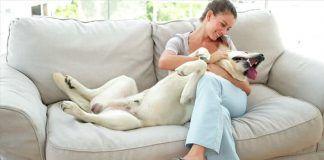 Apartamentos que admiten perros en España