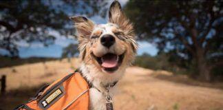 bungalows que admiten perros