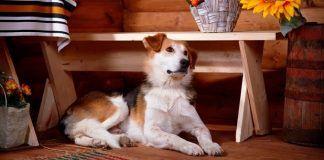 casas rurales que admiten perros