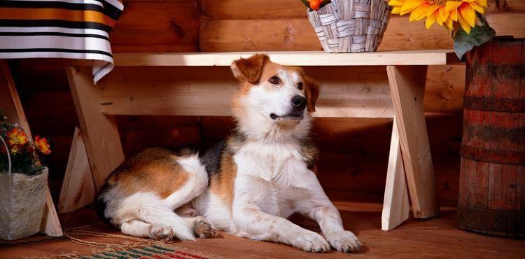 4 sitios donde conseguir casas rurales que admiten perros - Paginas de casas rurales ...