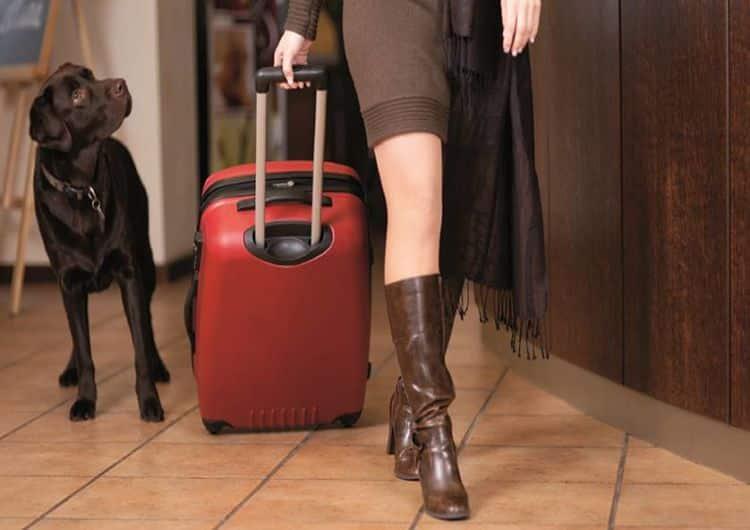 hoteles-que-admiten-perros-en-Madrid1