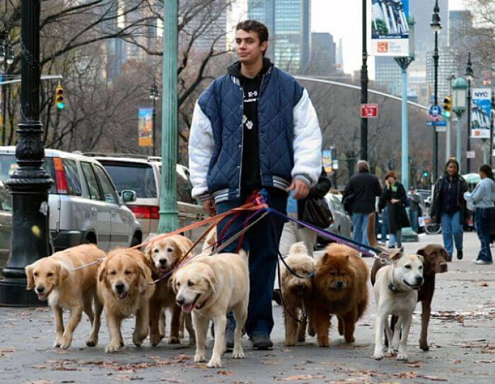 que es un paseador de perros