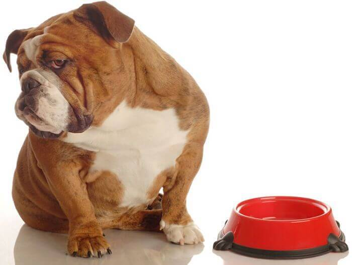 Dog Not Interested In Food