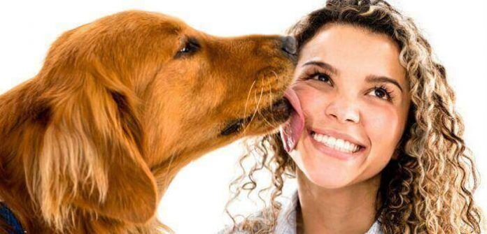 Razones por la que lamen los perros