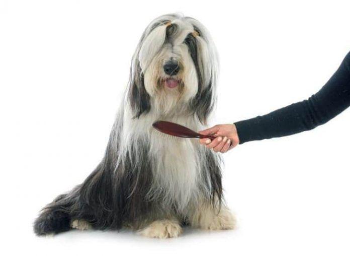 cómo cepillar a un perro