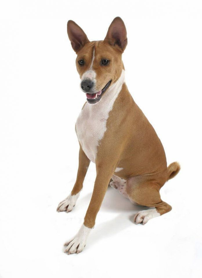 pedigree en perros