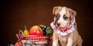 que frutas puede comer mi perro
