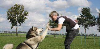 Cómo enseñarle trucos a un perro