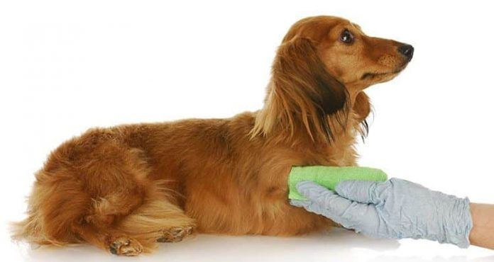 cómo curar una herida a un perro