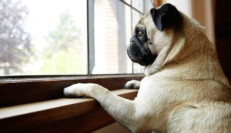 Conoce qué puede causar estrés en tu perro