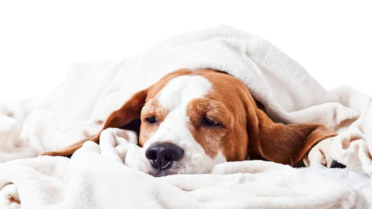 Algunos perros presentan síntomas visibles de estrés. Conócelos