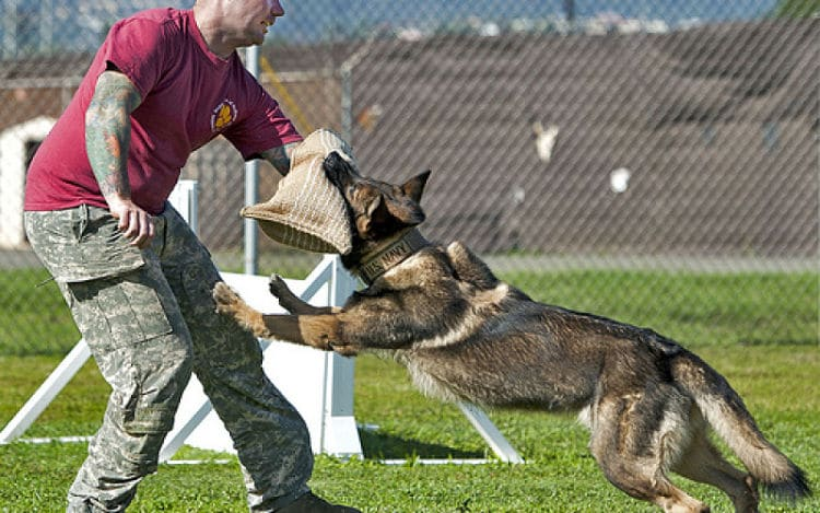 Police Dog Attack Training