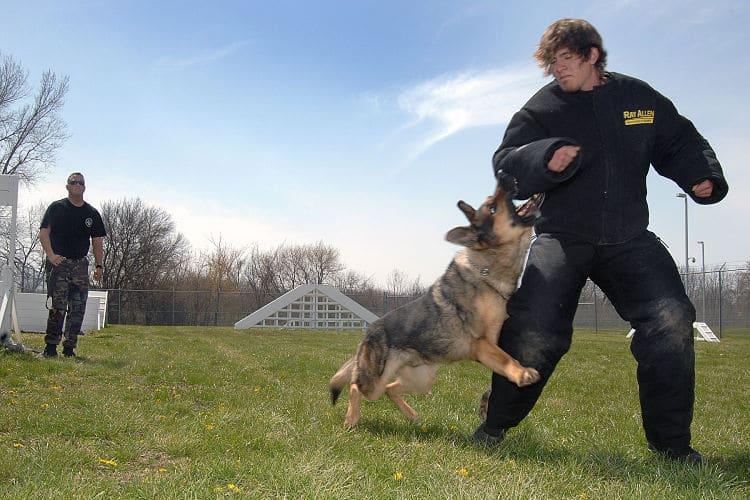 Como adiestrar a un perro en ipo