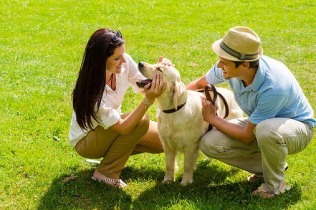 cuidados de los perros