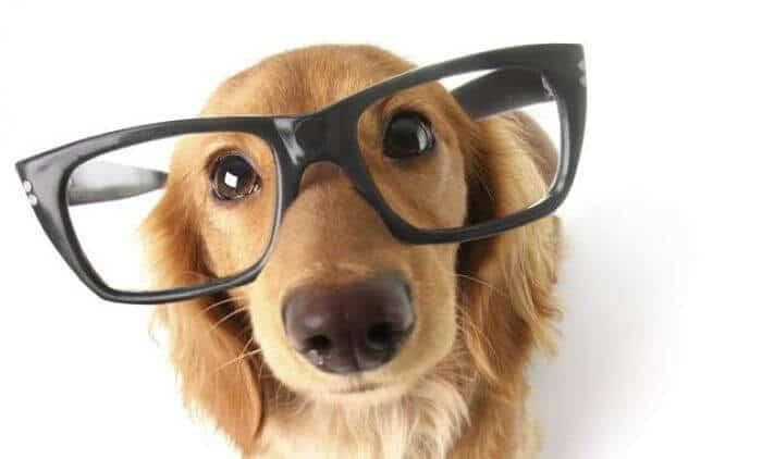 Es malo cortar bigotes en los perros descubrelo aqu - Es malo banar mucho a los perros ...