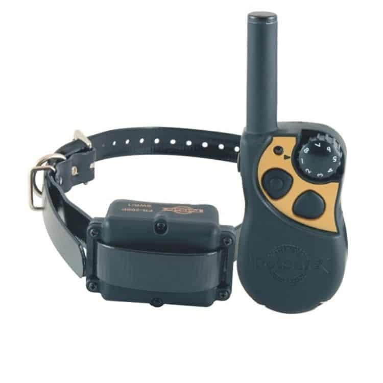 collar el233ctrico para perros todo lo que debes saber