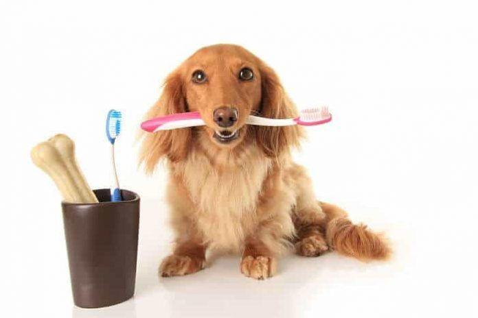 higiene bucal de los perros