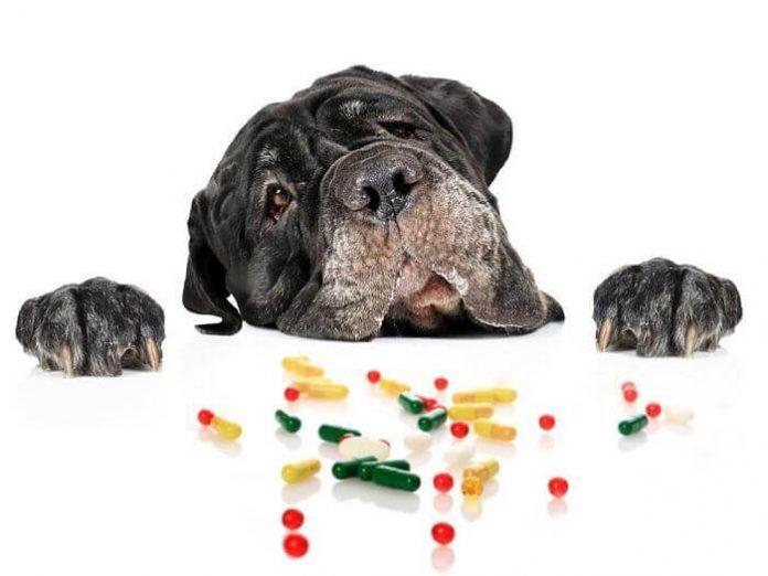 las vitaminas para perros