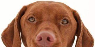 por qué babean los perros