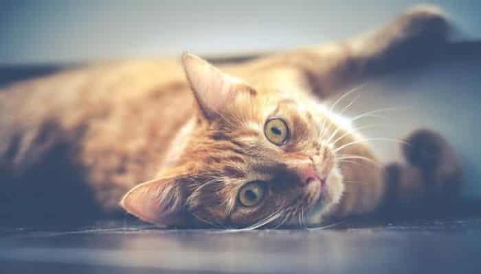 los gatos con caspa