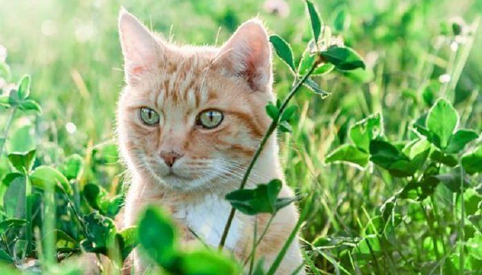 los gatos con rabia