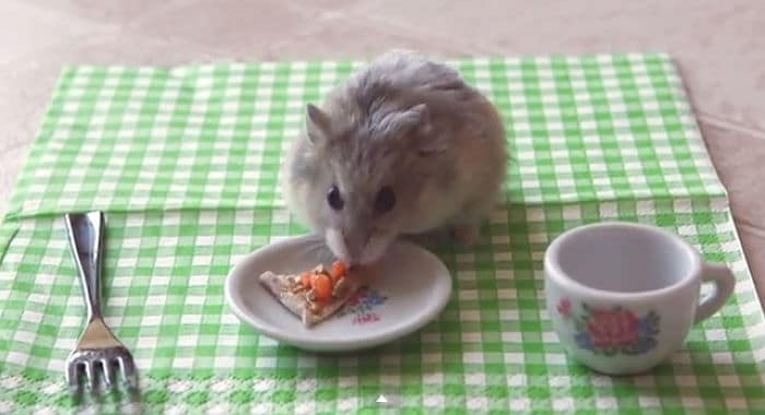 Qué-alimentos-comen-los-hámster-2