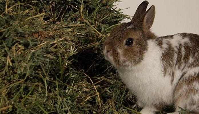 alimentación de los conejos