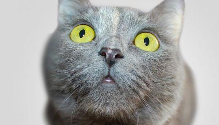 Las lombrices de los gatos