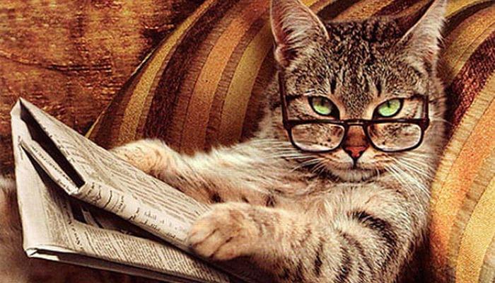 que piensan los gatos