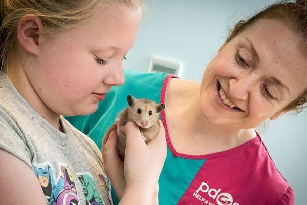enfermedades-de-los-hamsters-4