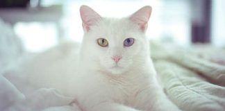 los gatos y la invermectina