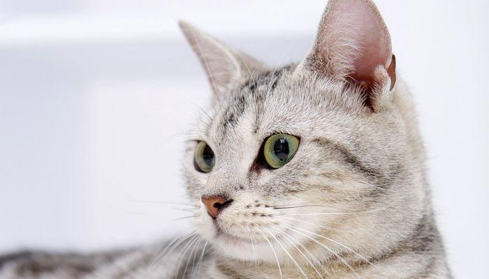 los gatos y el cáncer