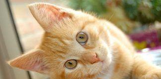 evitar que un gato defeque en el jardín