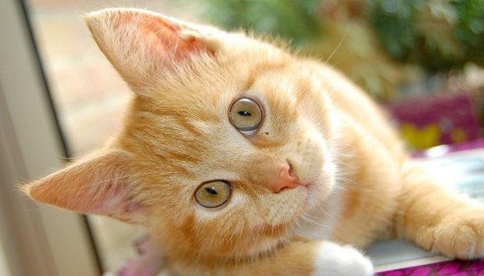como evitar que los gatos defequen en el jard n