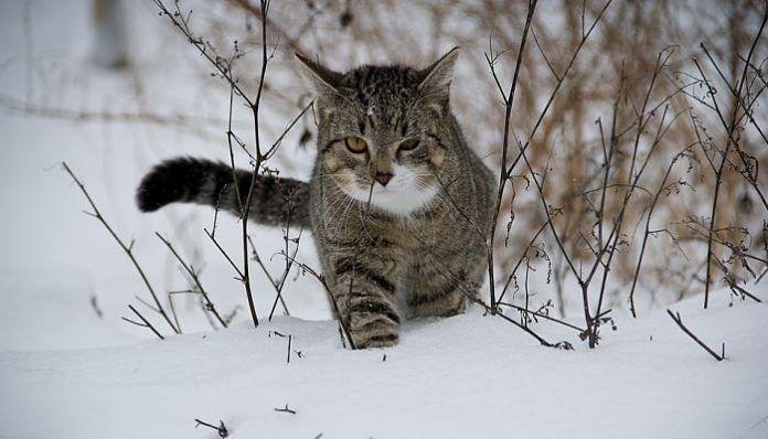 hipotermia en los gatos