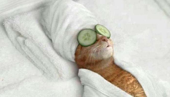 hoteles que admiten gatos