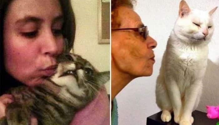 los gatos odian el exceso de manipulación