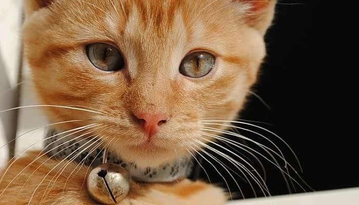 los gatos y el mal aliento