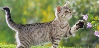 olores que ahuyentan a los gatos