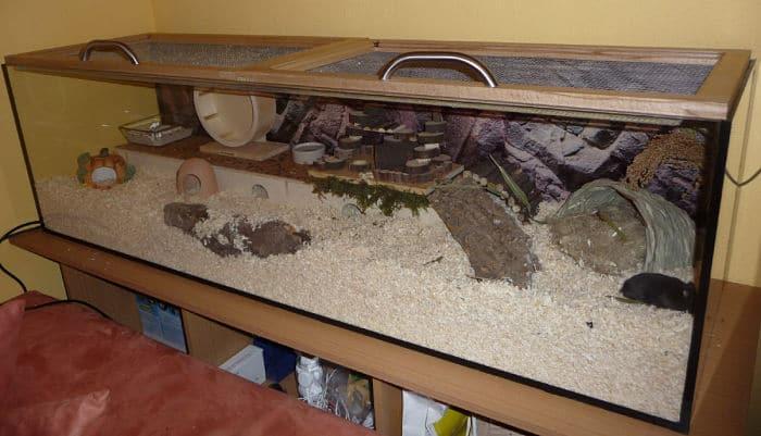 que-jaula-es-mejor-para-un-hamster-3