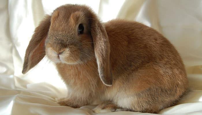 Fotos de conejos de razas 77