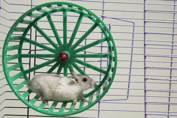 juguetes-para-hamsters-1