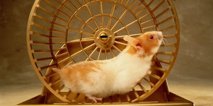 todo-lo-que-se-necesita-para-tener-un-hamster-5