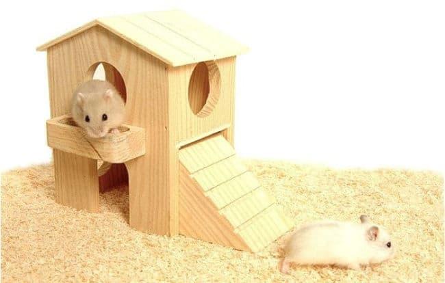 todo-lo-que-se-necesita-para-tener-un-hamster-6