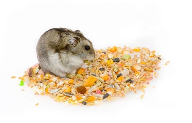 todo-lo-que-se-necesita-para-tener-un-hamster-8